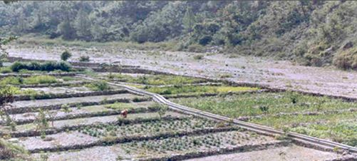 Irrigation to the cultivated crops through irrigation channels