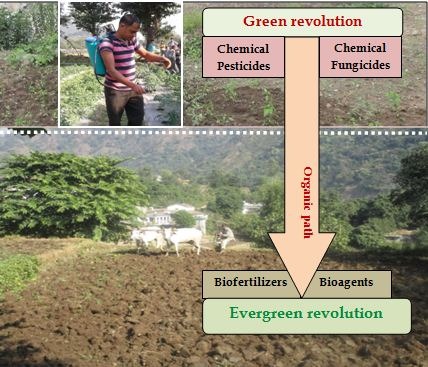 Green revolution to Evergreen revolution –A sustainable shift