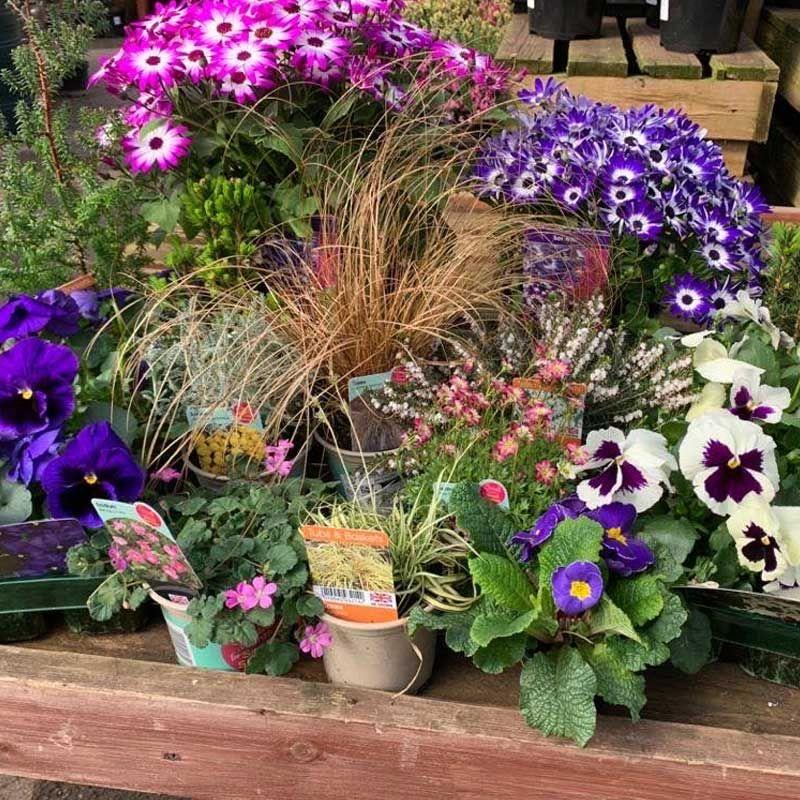 patio pot plants mystery mix
