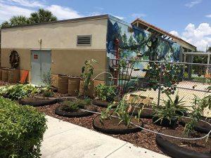 Water Wise Landscape Solutions, Beachside Montessori School teaching garden vegetables