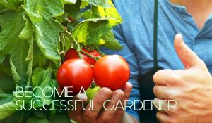 Water Wise, become a successful gardener blog post image