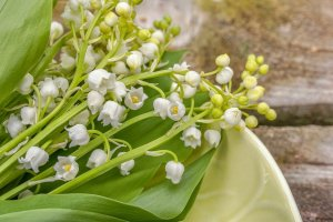 lily of the valley, fragrance, fragrant