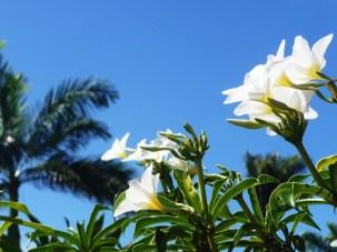 Karibische Flora