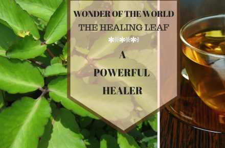 Wonder of The World the healing plant