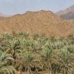 EMIRATOS: Los anónimos AL FUJAIRAH & BAHREIN
