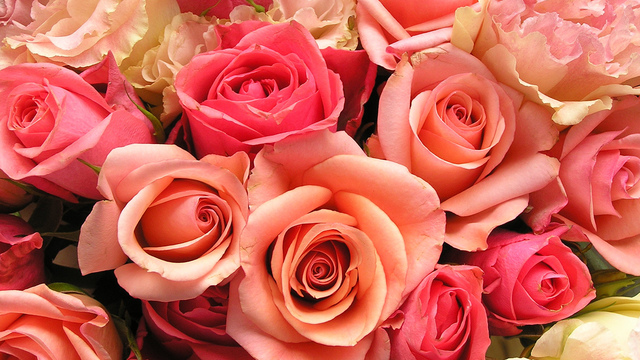 roses-flowers-valentines-day_1517879321399_340223_ver1-0_33247436_ver1-0_640_360_691536