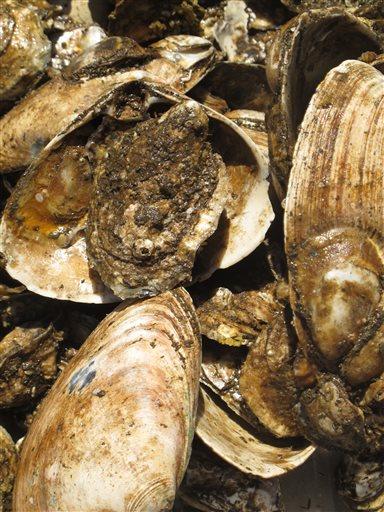 Shellfish-Consumer Protection_224941