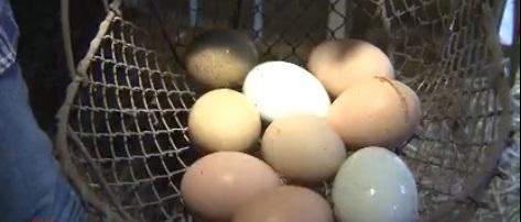 eggs_129209