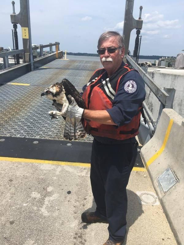 VDOT worker saves  osprey 3_1532543037930.jpg.jpg