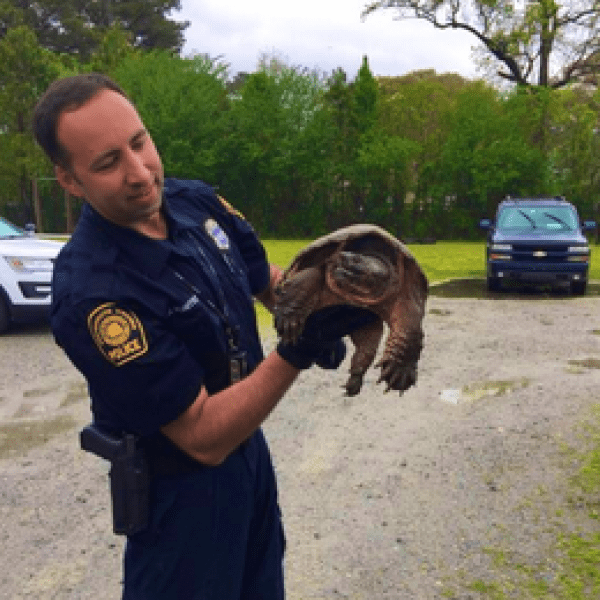 Ports turtle rescue 2_1555279056773.PNG.jpg