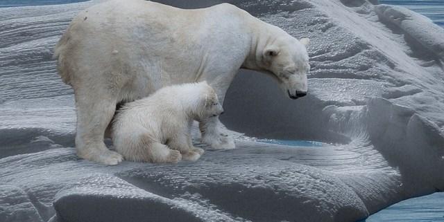 Klimakonferenz, Eisbären auf Eisscholle