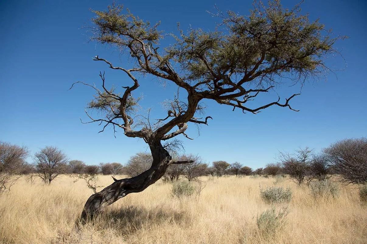 Cheetah Conservation Waterberg Plateau Namibia