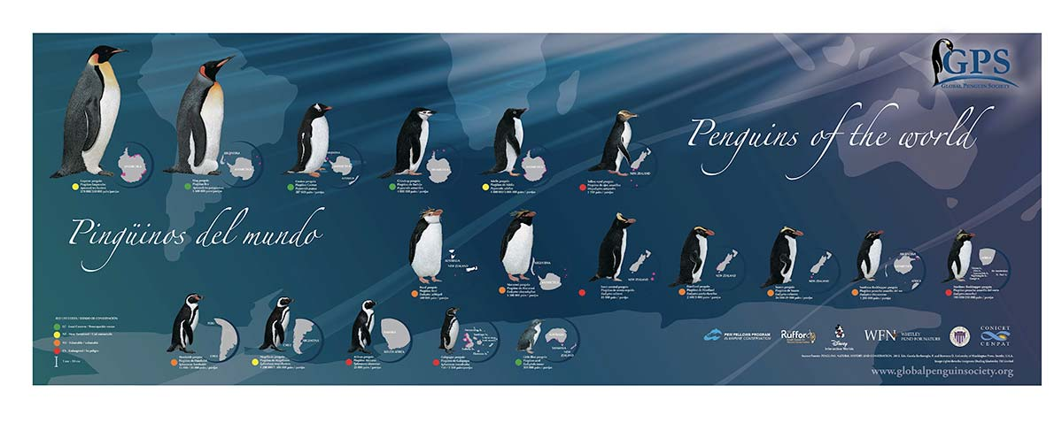 Global Penguin Society world Penguiins