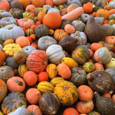 Pumpkin Festival in Ludwigsburg