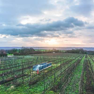 Winter Wine Trip from Mainz to Rheingau