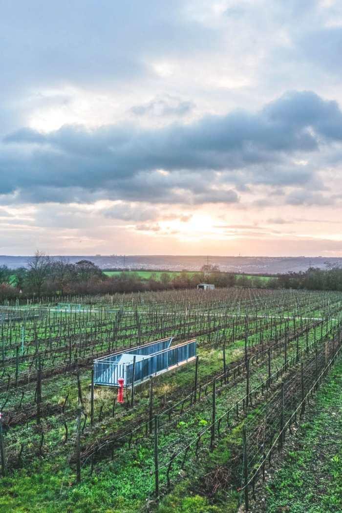 Winter Wine Trip from Mainz to Rheingau