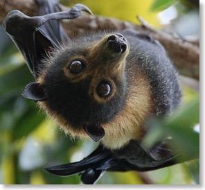 bat-edited