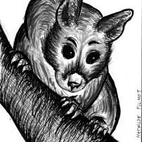 WTN_dessin-possum