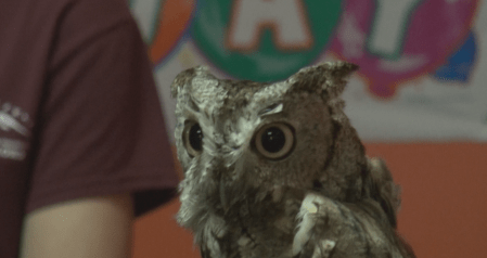 OWL_1522458478452.png