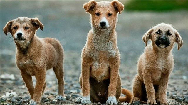 dog dogs puppy puppies_1511879175374_29487428_ver1.0_640_360_1520432488556.jpg-794306118.jpg