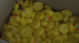 DUCKS_1533761239099.png