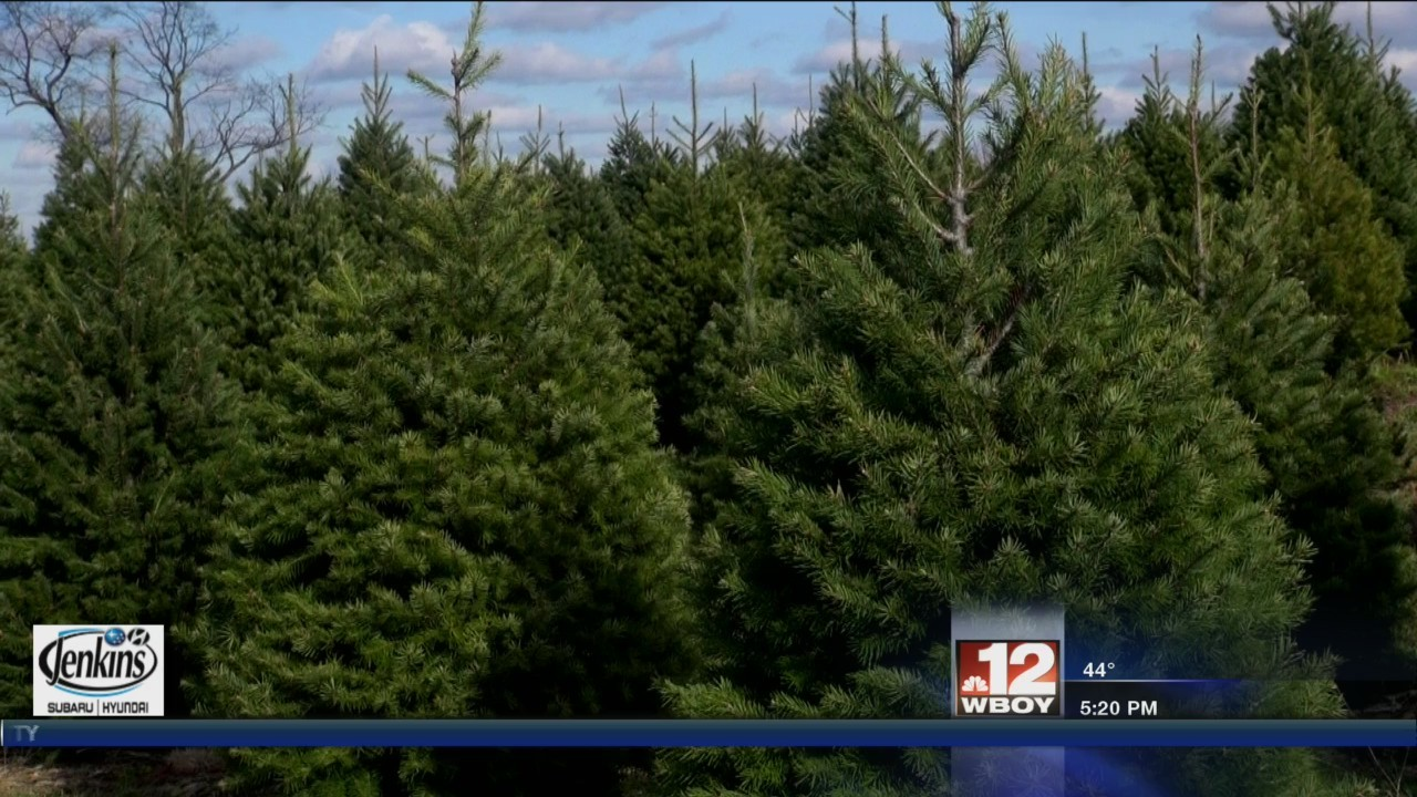 State fire officials share how to safely dispose of used Christmas trees