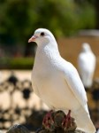 Support - Relaters - Doves