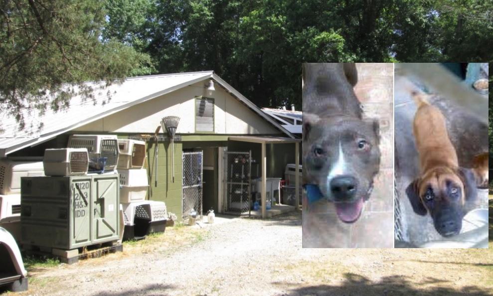 2 Dogs Killed By Lightning Strike At Darlington Animal Rescue