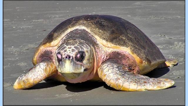 Matt Nash – Sea Turtle Show
