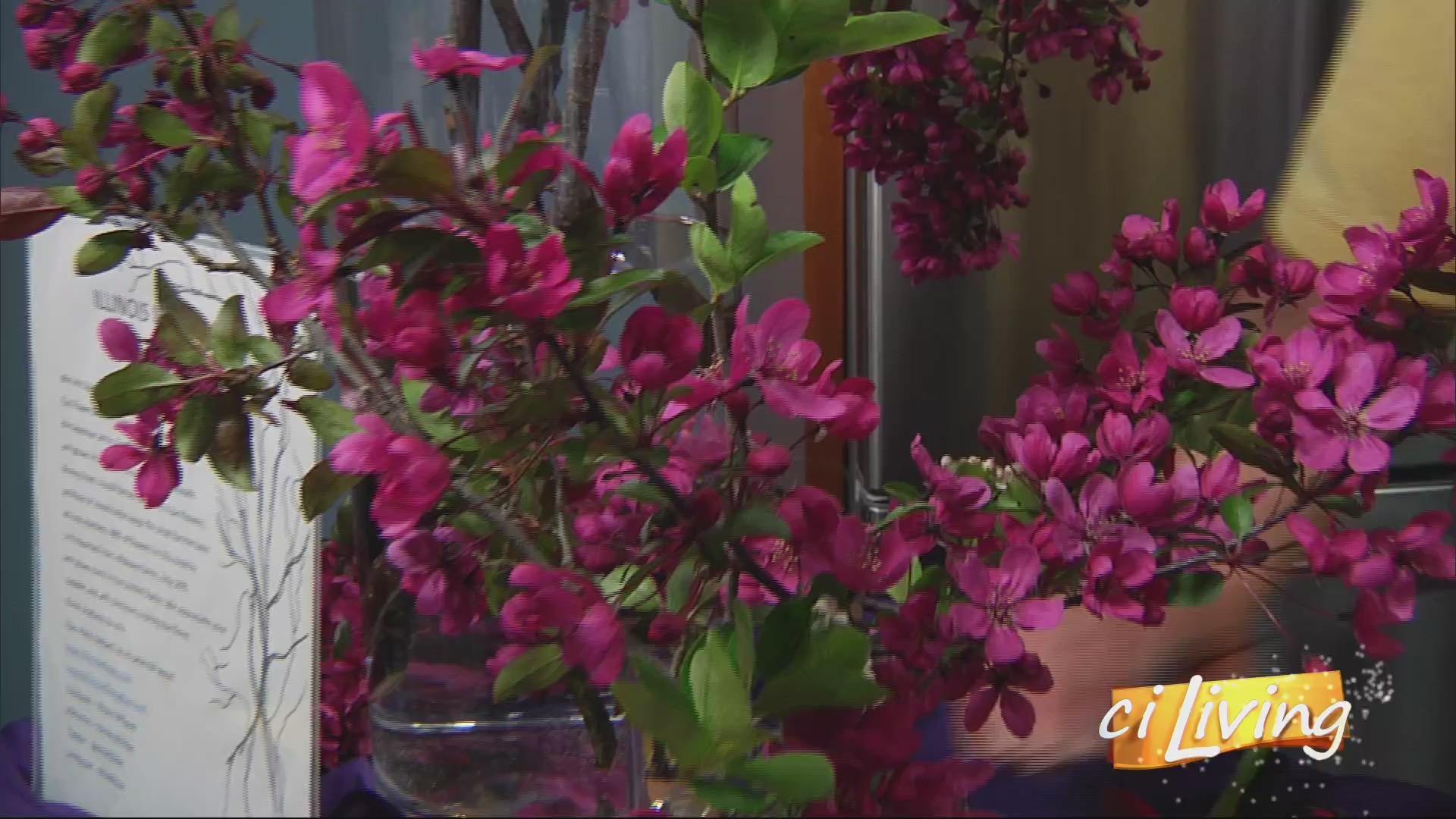 Illinois Willows Fresh Spring Decor