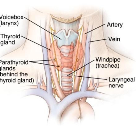 Thyroid / Parathyroid Disease