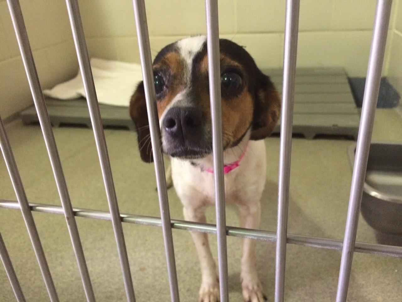 adoption dog-1_103869