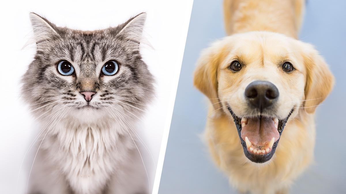 dog-cat-diptych_253632