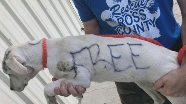 free puppy_1528452366123.JPG.jpg