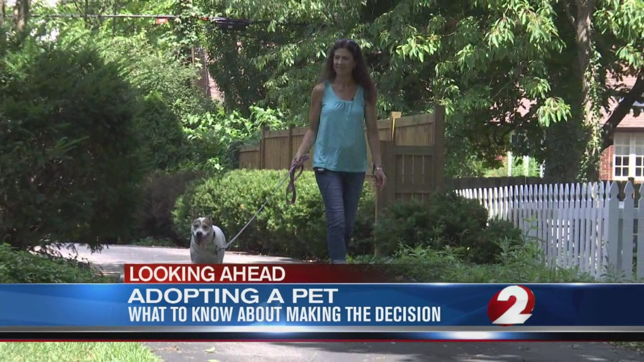Adopting a pet, what to know about decision