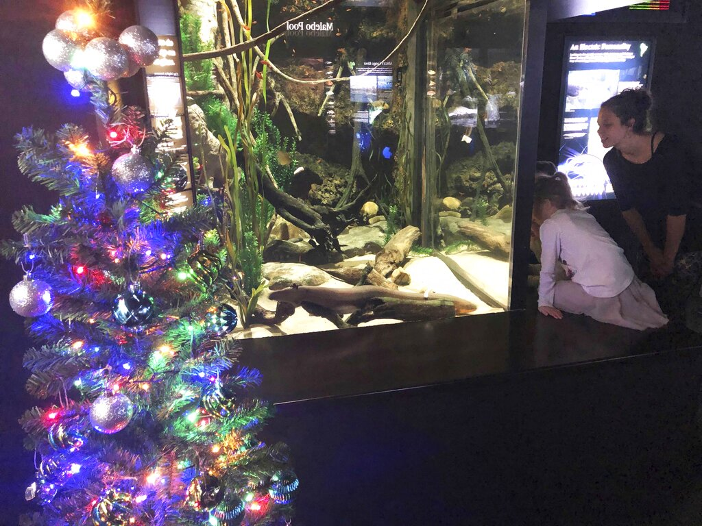 Electric Eel Christmas