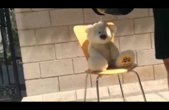 Teddy Bear does the ice bucket challenge