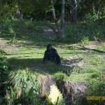 Wild-Africa-Trek-wdwradio-695