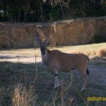 Wild-Africa-Trek-wdwradio-860