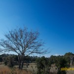 Wild-Africa-Trek-wdwradio-879