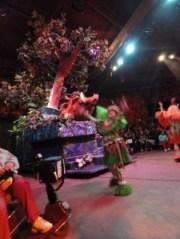festival of lion king ecv