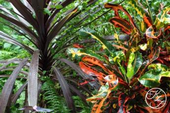 botanical-gardens-kf