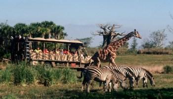 Walt Disney World POP! Quiz - Kilimanjaro Safaris Answers