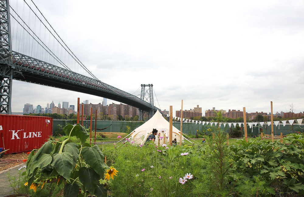 north-brooklyn-farm-ferme-urbaine-a-new-york-1