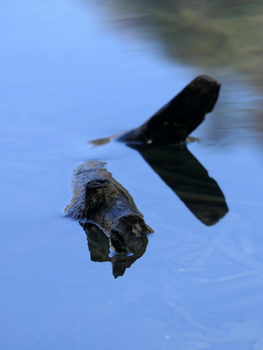 Ast im Wasser