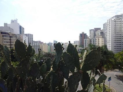 4vuecactus0389_eddf494414.jpg