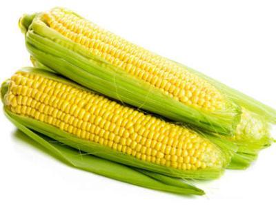 Corn-Maize