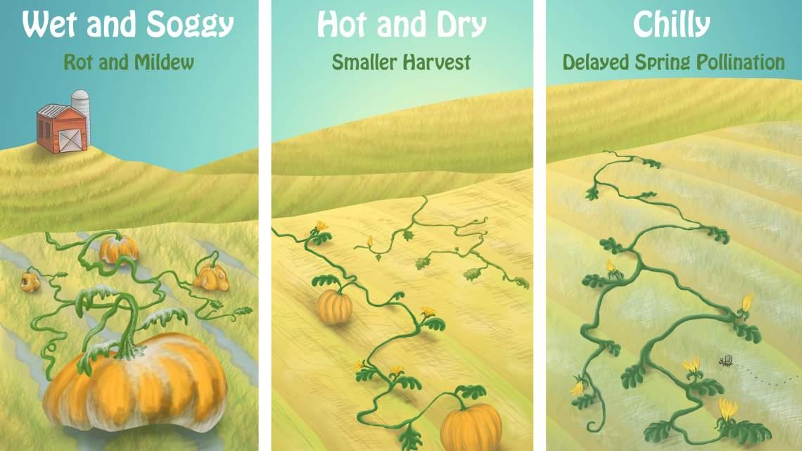 WEB15-Weather-PumpkinHarvest-3200x1800_1540514639677.jpg