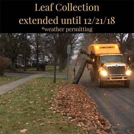 Leaf collection extended_1543618112914.jpg.jpg