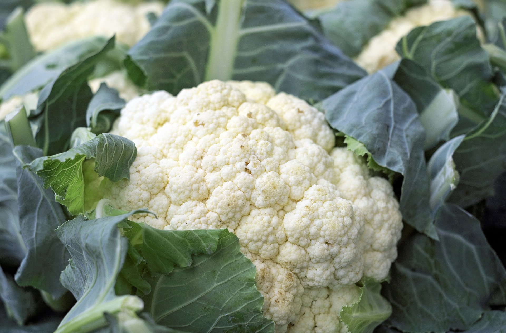 cauliflower-1465732_1920_1545263498531.jpg
